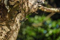 Het stelen van spin Stock Afbeelding
