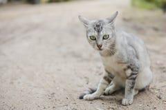 Het Stellen van de kat Stock Afbeeldingen