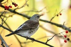 Het stellen van een vogel royalty-vrije stock afbeeldingen