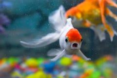 Het stellen vissen stock foto