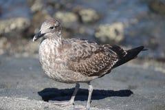 Het stellen vogel royalty-vrije stock foto's