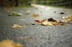 Het sterven bladeren Royalty-vrije Stock Foto's