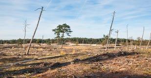 Het sterven bomen in een troosteloos landschap Royalty-vrije Stock Foto
