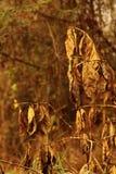 Het sterven boom Stock Afbeelding