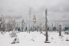 Het sterven bos in de winter Stock Afbeelding