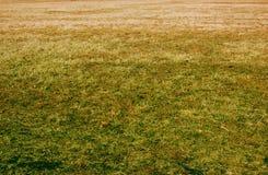 Het sterven Gras Stock Foto's