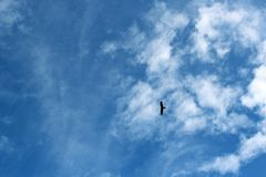 Het stijgen adelaar stock foto