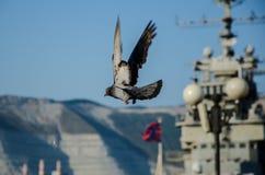 Het stijgen duif stock fotografie
