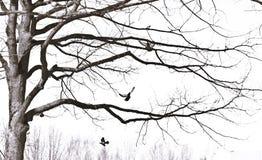 Het stijgen vogels Stock Foto