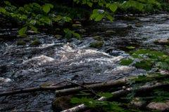 Het stil leven door de rivier royalty-vrije stock afbeeldingen
