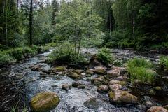 Het stil leven door de rivier stock foto's