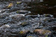 Het stil leven door de rivier stock foto