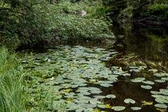 Het stil leven door de rivier stock fotografie