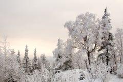 Het stille de winter bevroren bos van het sprookjesland royalty-vrije stock afbeelding