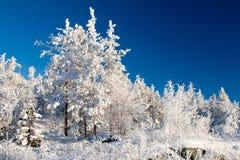Het stille de winter bevroren bos van het sprookjesland Stock Afbeeldingen