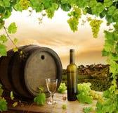 Het stilleven en de wijngaard van de wijn Royalty-vrije Stock Afbeelding