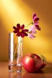 Het stilleven van bloemen en van appelen Royalty-vrije Stock Foto's