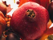 Het Stilleven van de granaatappel Stock Afbeeldingen