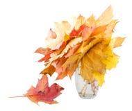 Het Stilleven van de herfst. Stock Foto's