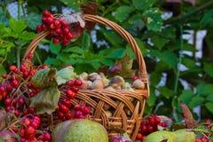 Het stilleven van de herfst Royalty-vrije Stock Afbeeldingen