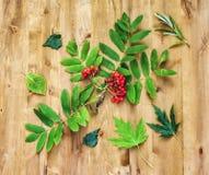 Het stilleven van de herfst Bessen van lijsterbes en groene bladeren op a Royalty-vrije Stock Foto