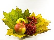 Het stilleven van de herfst met appelen en viburnum Stock Afbeeldingen