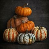 Het stilleven van de herfst mooie pompoen royalty-vrije stock foto
