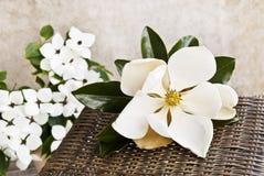 Het Stilleven van de magnolia en van de Kornoelje Royalty-vrije Stock Fotografie