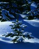 Het Stilleven van de winter Royalty-vrije Stock Afbeeldingen