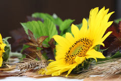 Het stilleven van de zonnebloem Royalty-vrije Stock Fotografie