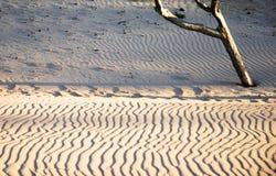 Het stilleven van duinen Stock Foto