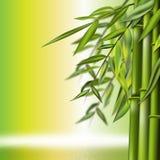 Het stilleven van het bamboe Stock Foto's