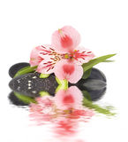 Het stilleven van het kuuroord met wilde roze orchidee Stock Foto's