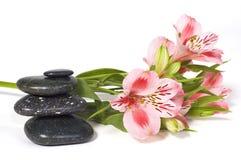 Het stilleven van het kuuroord met wilde roze orchidee Stock Fotografie