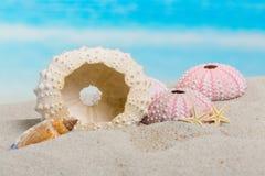 Het Stilleven van het strand Royalty-vrije Stock Afbeelding