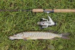 Het stilleven van vissen Royalty-vrije Stock Foto's