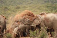 Het stofbad van de olifant. royalty-vrije stock afbeelding