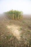 Het stoppelveld van het graan op een nevelige ochtend royalty-vrije stock afbeeldingen