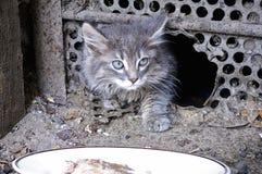 Het straatkatje komt voorzichtig uit aan de plaat met voedsel stock foto
