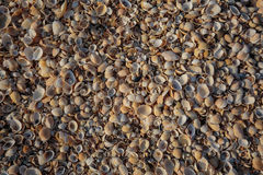 Het strand is behandeld met multicolored shells van schaaldieren Stock Foto's