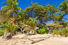 Het strand bij een toevlucht in de Caraïben royalty-vrije stock foto