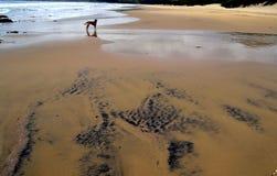 Het strand die het titanium tonen is de zandhond in de afstand Stock Afbeelding