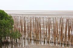 Het Strand en Bambooes van de mangrove Royalty-vrije Stock Afbeeldingen