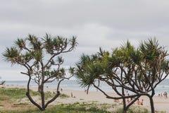 Het strand en het landschap in Surfersparadijs op de Gouden Kust Royalty-vrije Stock Fotografie