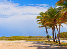 Het Strand Florida, palmen van Miami op een mooie de zomerdag Stock Afbeeldingen