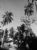 Het strand Koh Samui Thailand van het palmeneiland Stock Foto
