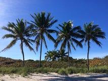 Het strand Miami de V.S. van Palmtreesdania Stock Afbeeldingen