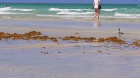Het strand oceaankust 4k Florida de V.S. van Miami van de de zomerdag stock videobeelden
