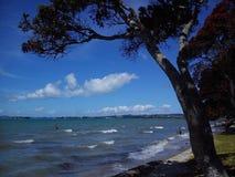 Het strand op de Vreedzame kust van Nieuw Zeeland, Auckland Royalty-vrije Stock Fotografie