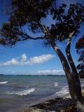 Het strand op de Vreedzame kust van Nieuw Zeeland, Auckland Royalty-vrije Stock Foto's